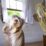 Ko je jači, pas ili ventilator?