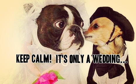 funny bride and groom dogs