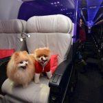 10 sigurnih znakova da ste dio banjalučkog jet-seta