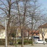 Servisne informacije: Šta je cvjetalo u Banjaluci u posljednjih 24 sata