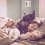 Najljepše je imati psa umjesto jastuka...