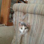 24 dokaza da su mačke najčudnija bića