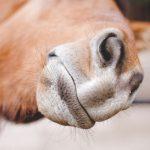 Konji zbunjeni: Banjalučki vozači parkiraju gdje stignu