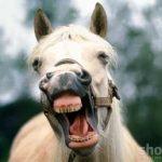 U jaslama pronađeno oproštajno pismo konja koji je izvršio samoubistvo